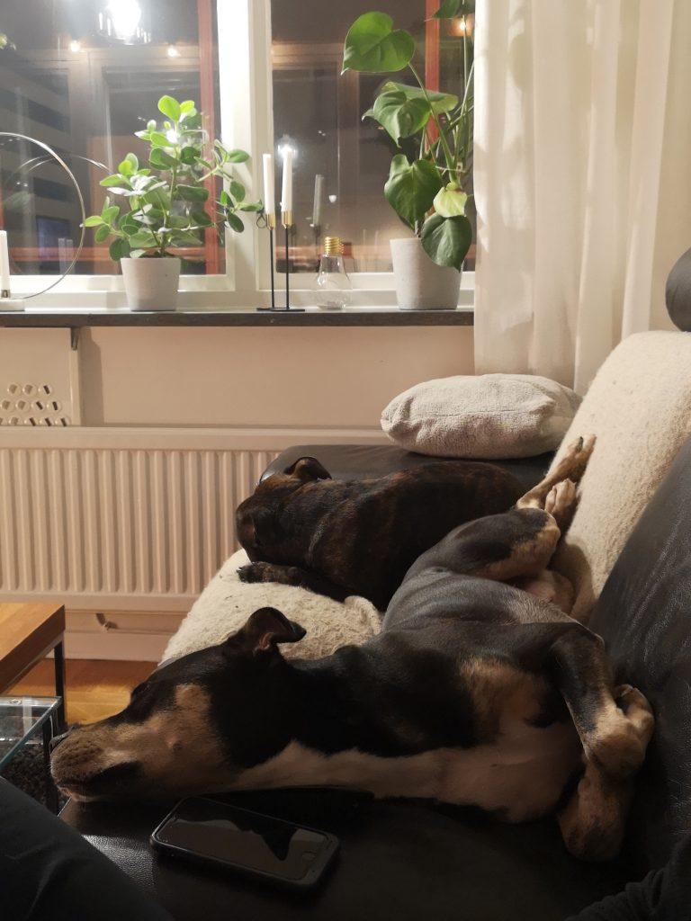 LINN STENHOLM Fitness dogs