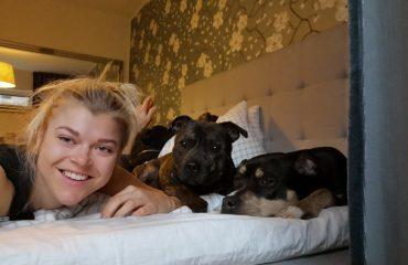 Linn Stenholm dogs Baxter Cian