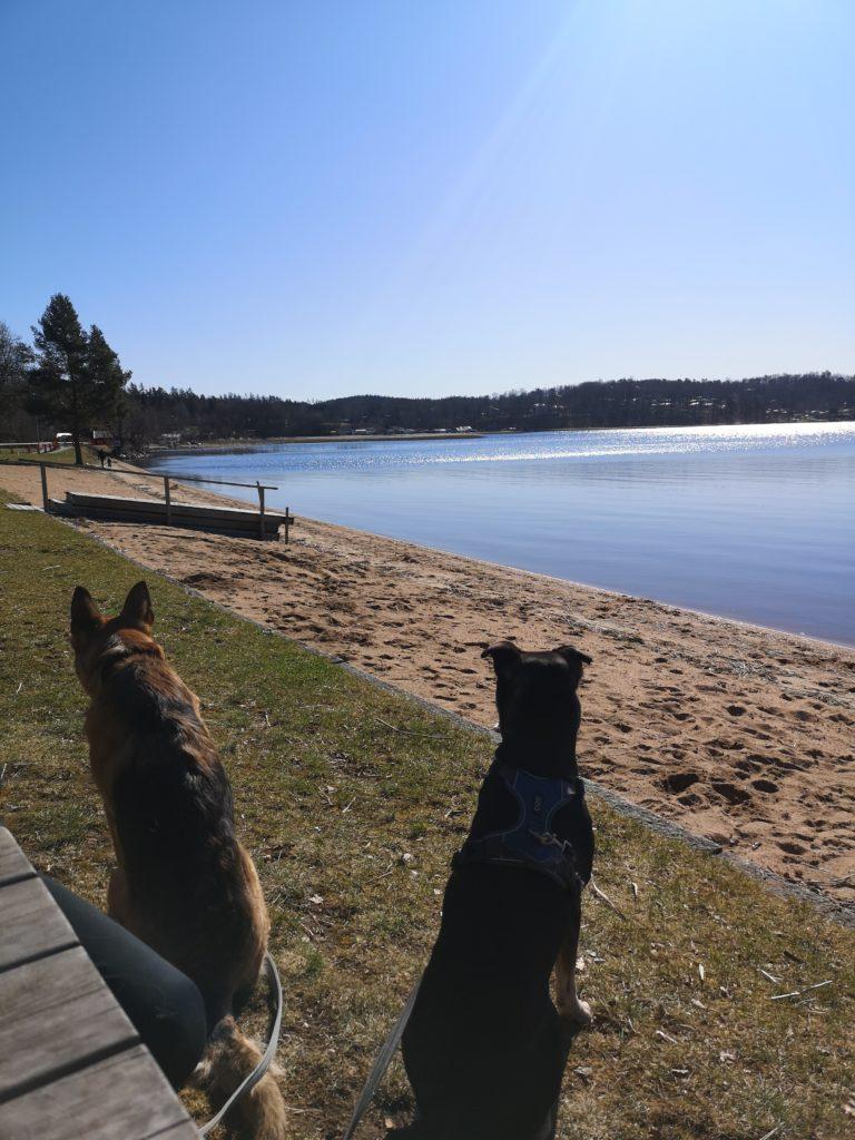 Linn Stenholms weekend dogs