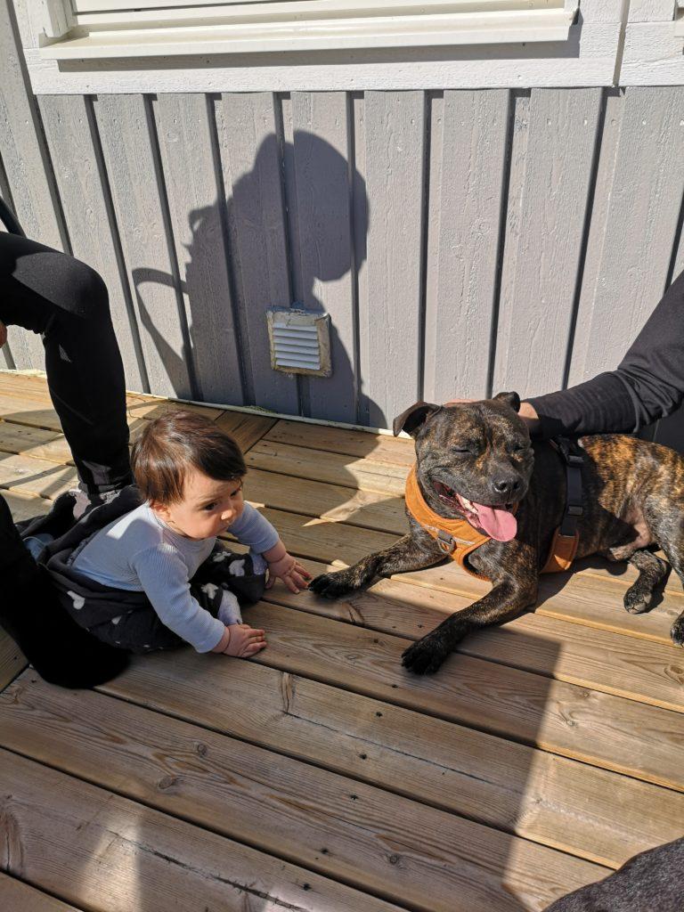 Linn Stenholm weekend dogs