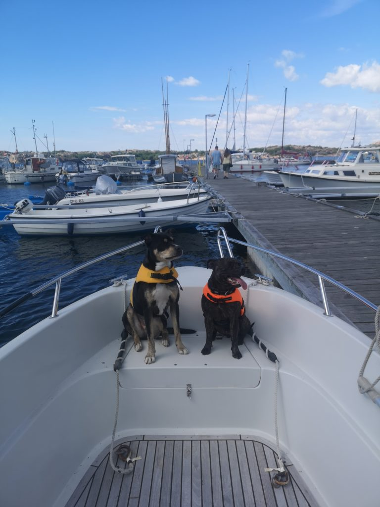 Cian and Baxter Linn Stenholm dogs