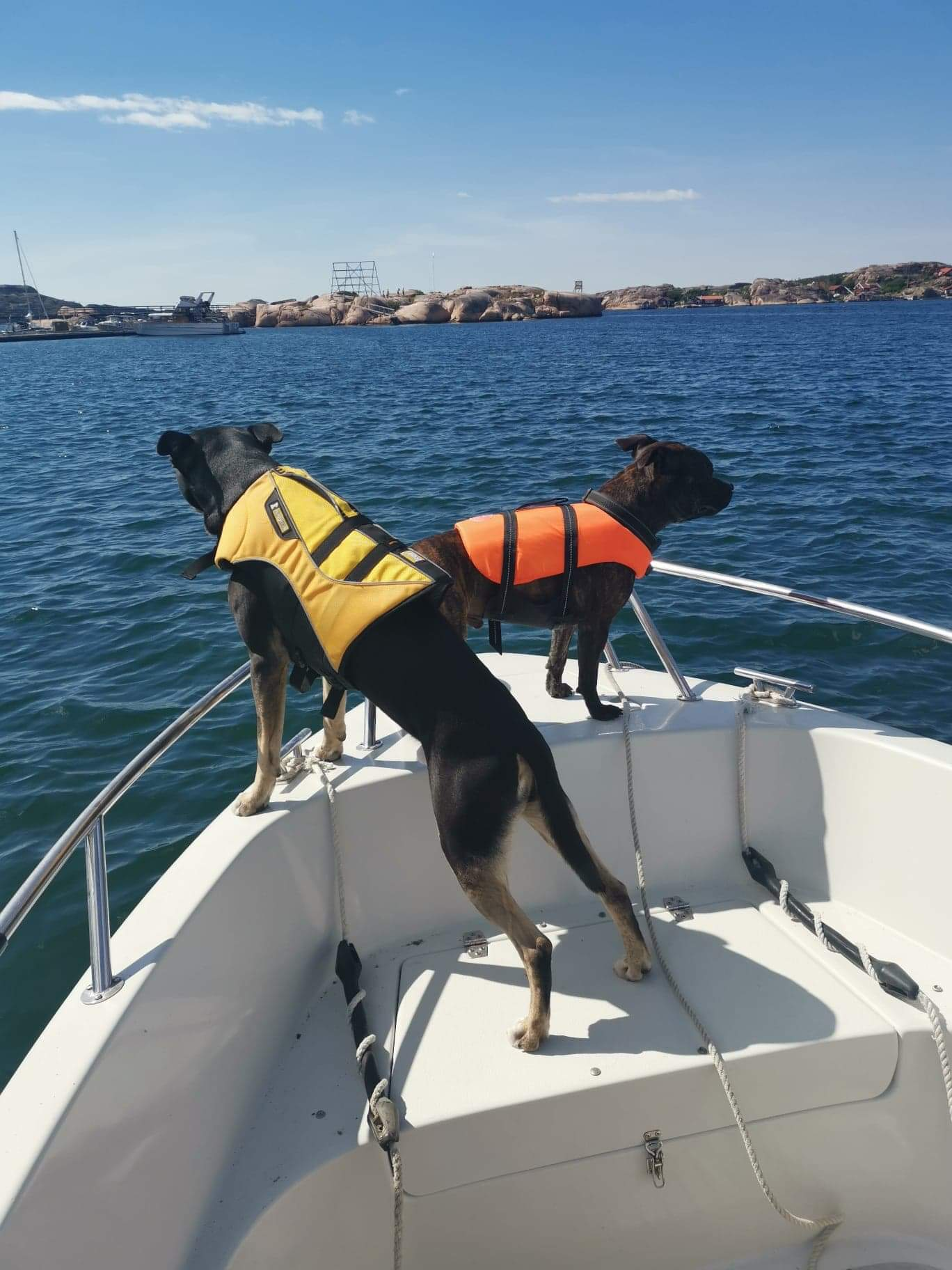 Linn Stenholm dogs Baxter and Cian
